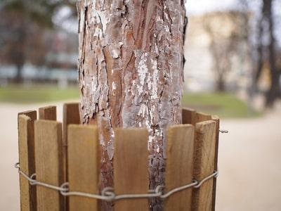 Schutz eines jungen Baumes gegen Verbiss