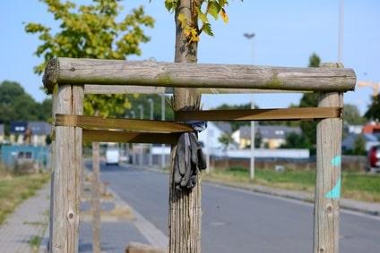Baumbindung bei Straßenbäumen
