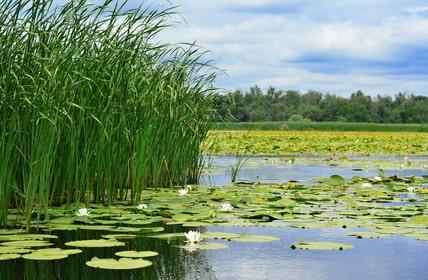 See mit Seerosen und Schilf am Ufer