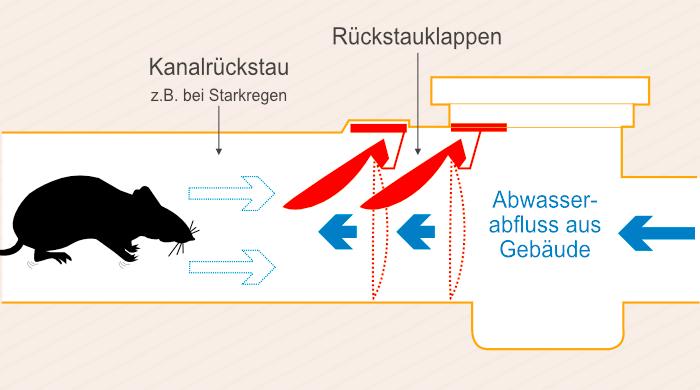 Rückstauklappen verhindern den Rückstau von Abwässern aus der Kanalisation, aber auch das Eindringen von Ratten.