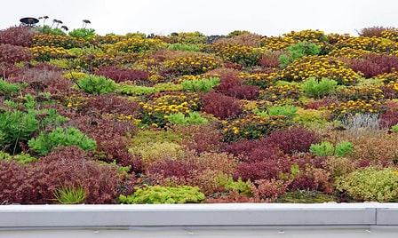 Extensive Dachbegrünung mit Sedum, Gräsern und Kräutern